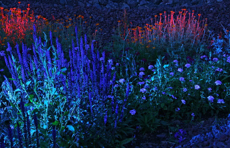 Paysage nocturne Jardins Lumière Chaumont